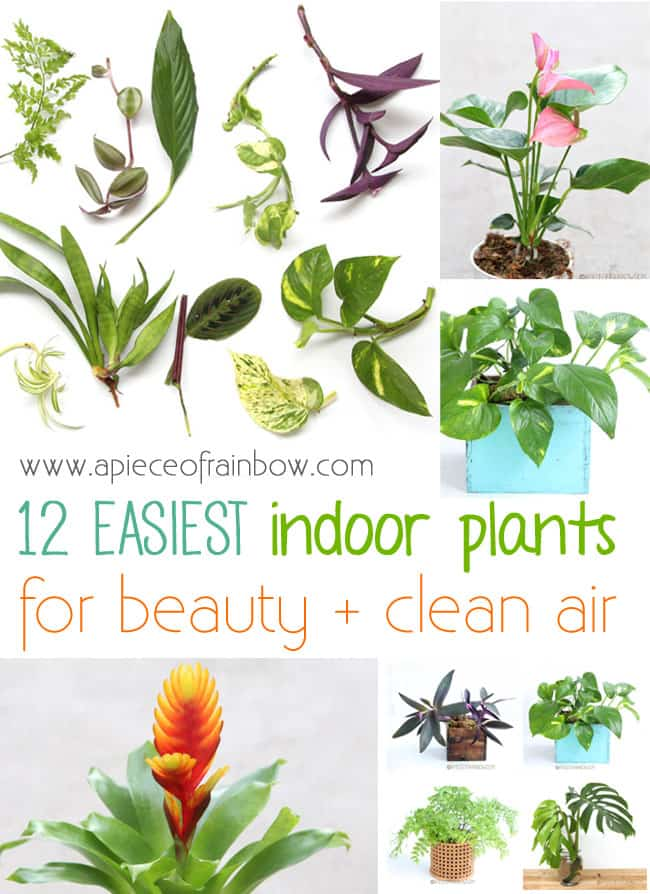 Easy Indoor Plants for beauty and clean air!