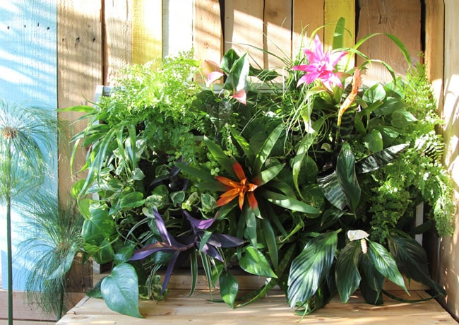 Build a stunning tropical living wall with pallet!