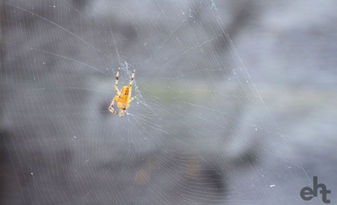 spider on web outside
