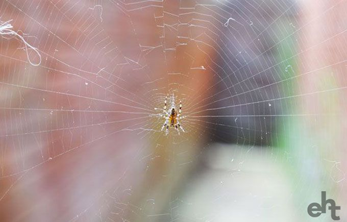 spider web with small spider