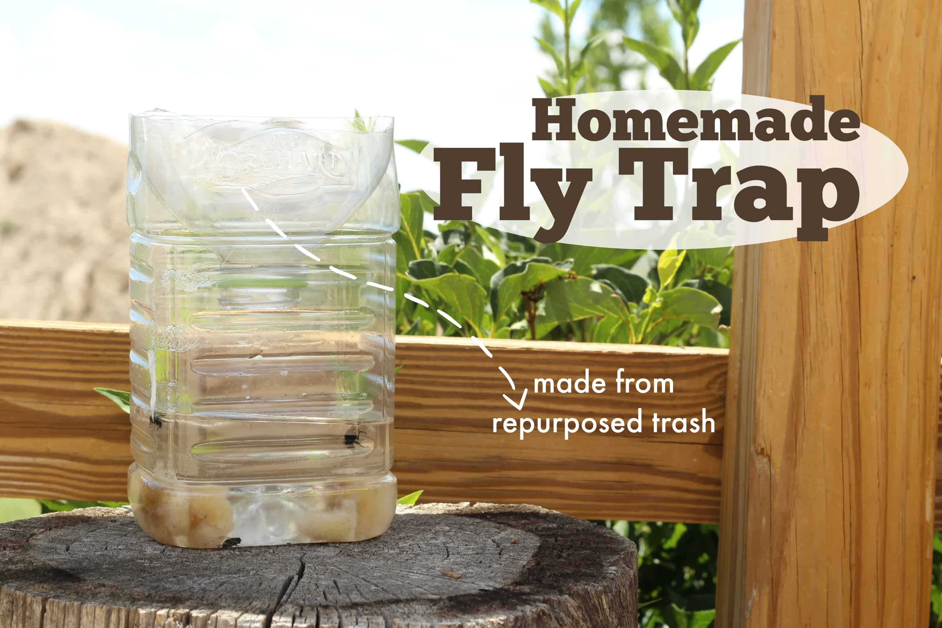 homemade fly trap